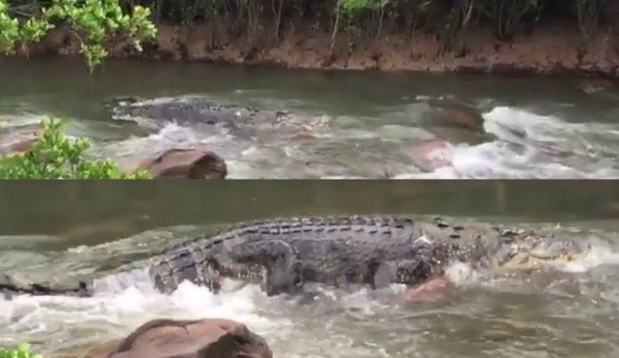 อึ้งตาค้าง! พิธีกรดังถ่ายคลิป จระเข้ยักษ์ใหญ่ ว่ายอยู่ในน้ำ ใครลงเล่นน้ำหัวใจวายได้